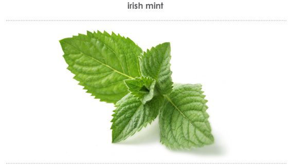 irish mint