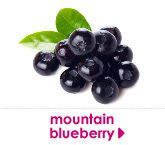 mountain blueberry